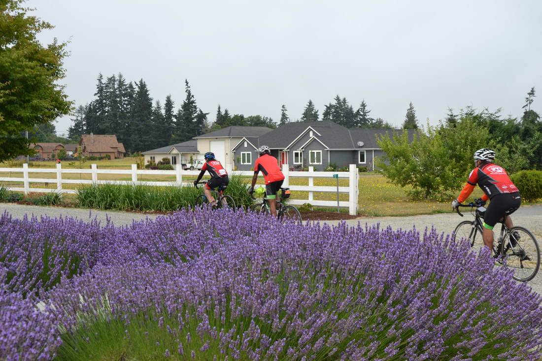 Visit Lavender Farms in Sequim